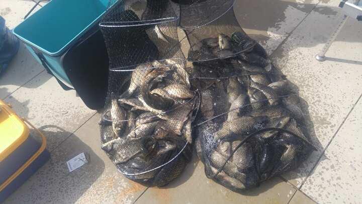 fish_pay_0554212.jpg