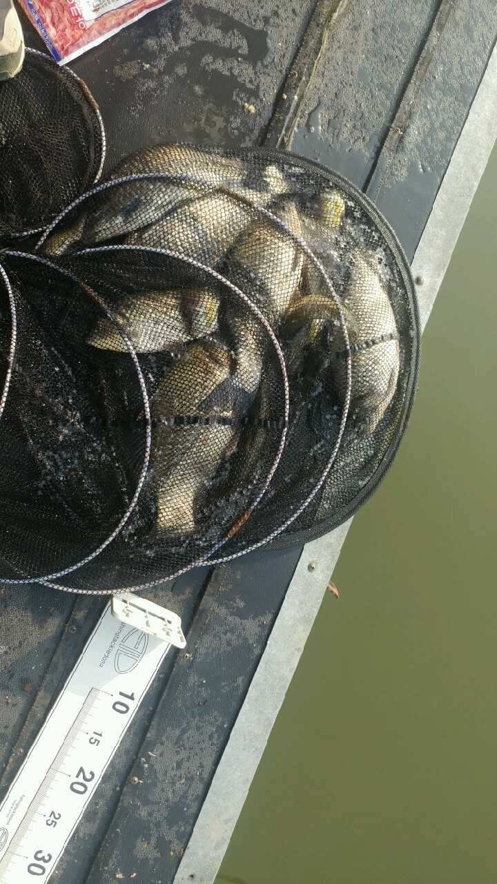 fish_pay_05552387.jpg
