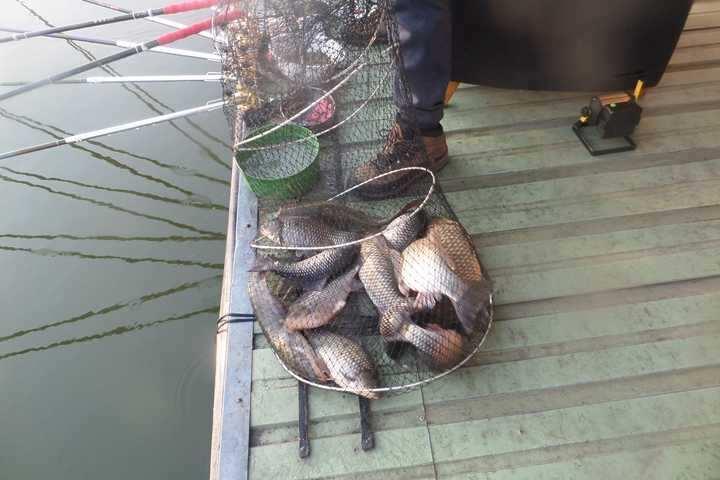 fish_pay_05561125.jpg