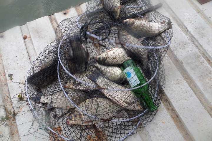 fish_pay_05563569.jpg