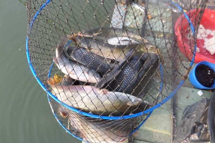 fish_pay_05565379.jpg
