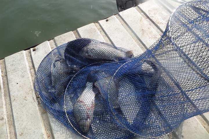 fish_pay_0558281.jpg