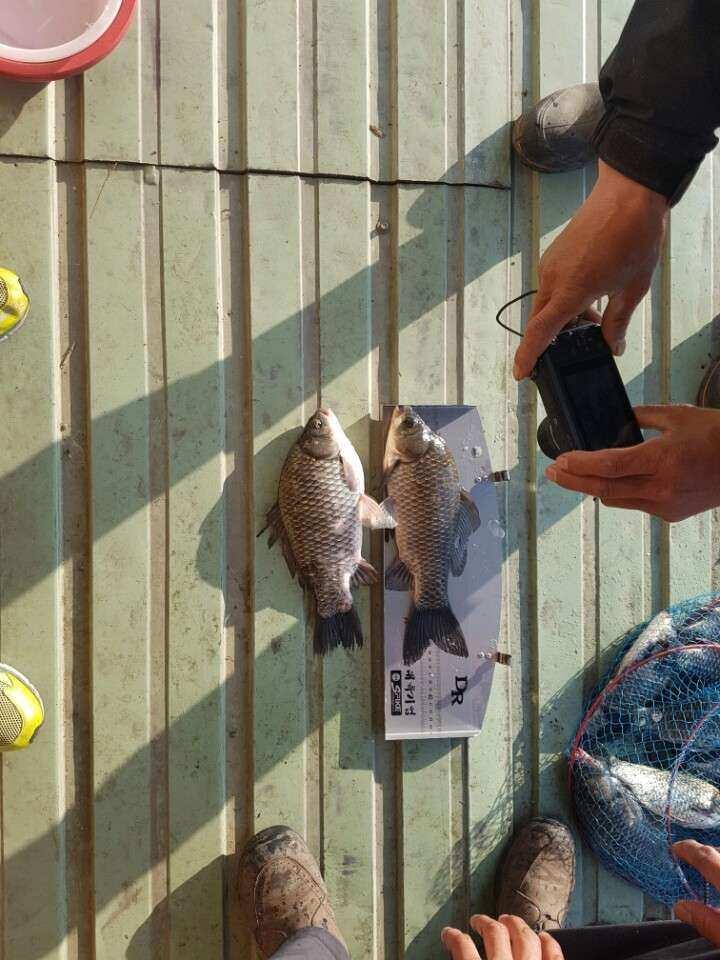 fish_pay_09513747.jpg