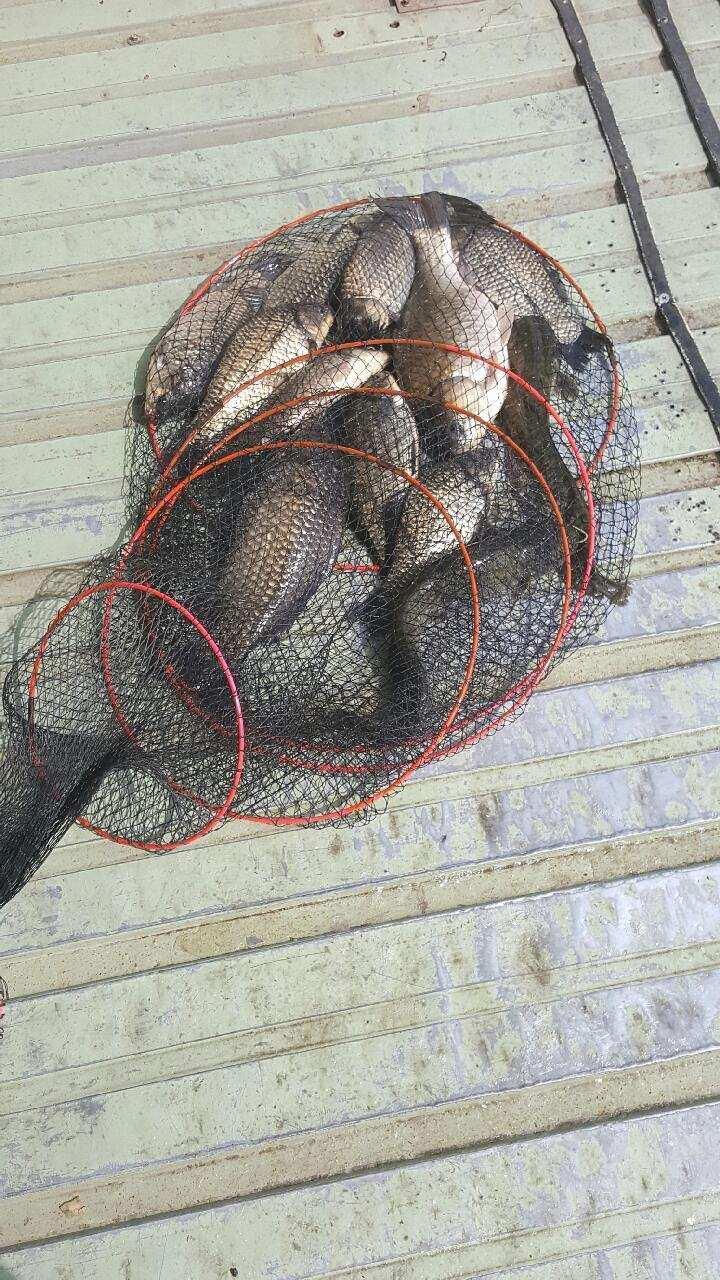 fish_pay_09515883.jpg