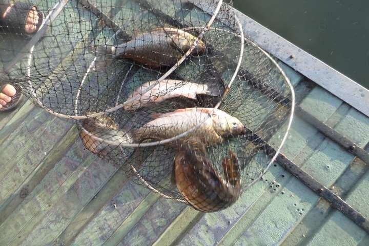 fish_pay_09530125.jpg