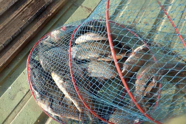 fish_pay_09532846.jpg