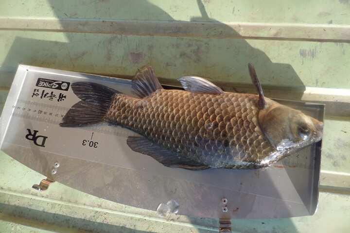 fish_pay_09533915.jpg