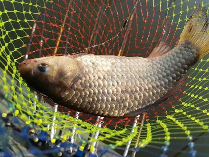 fish_pay_10123432.jpg
