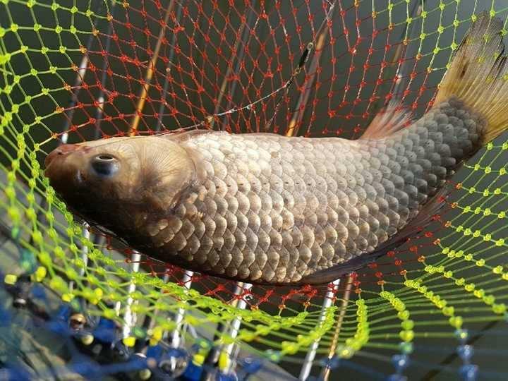 fish_pay_10124068.jpg