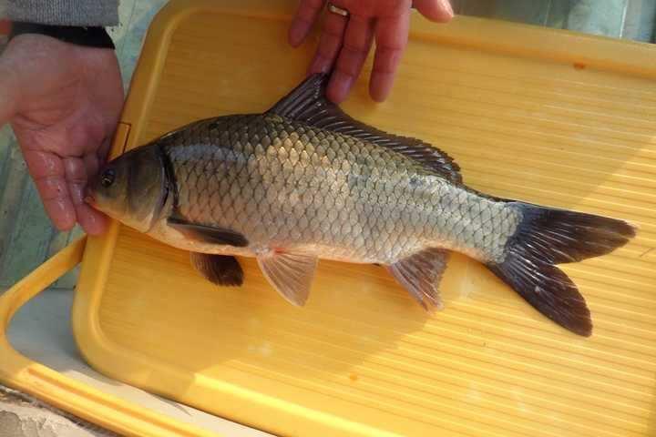 fish_pay_10134355.jpg