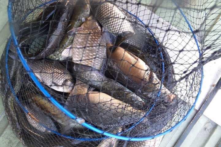 fish_pay_10142298.jpg