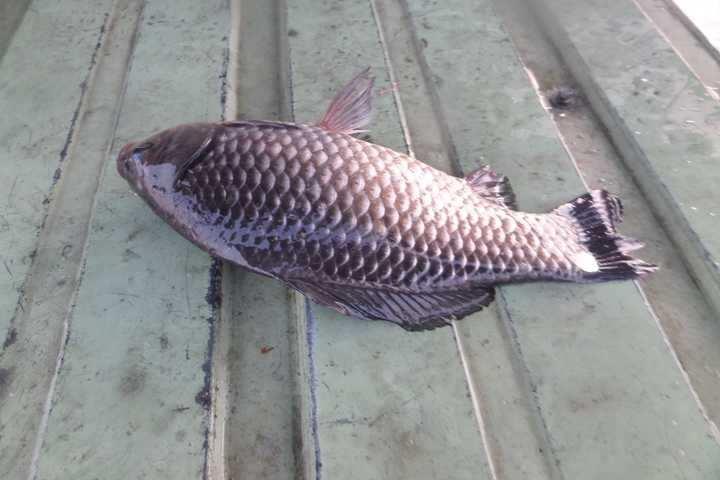 fish_pay_10142673.jpg