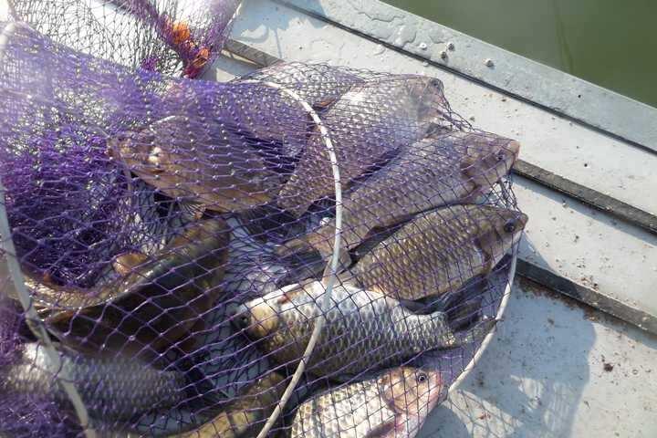 fish_pay_10143425.jpg