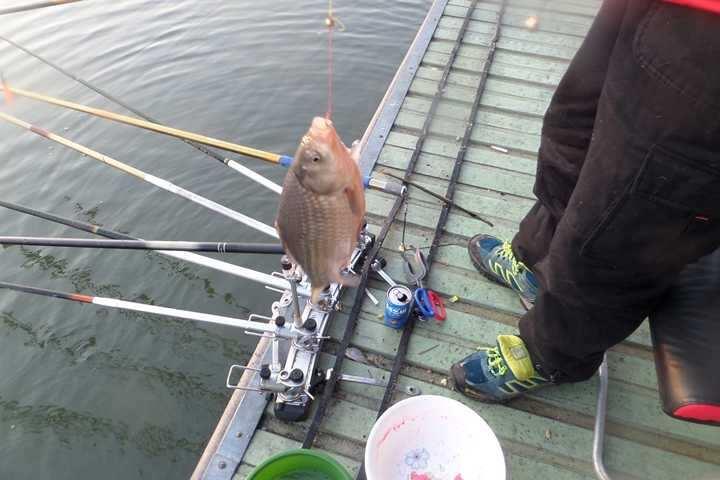 fish_pay_10151138.jpg