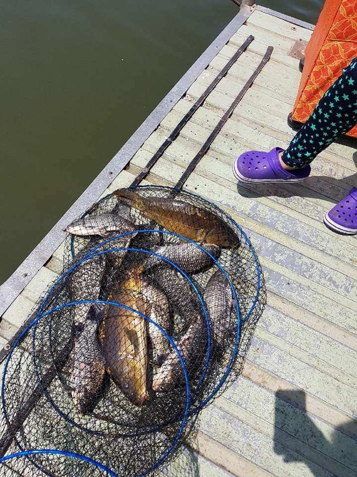 fish_pay_11225876.jpg