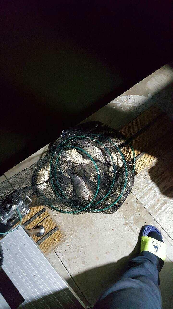 fish_pay_11232136.jpg
