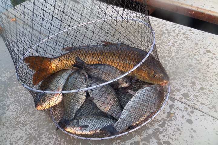 fish_pay_11241464.jpg