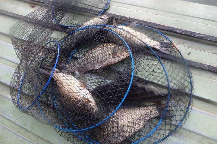 fish_pay_11255494.jpg