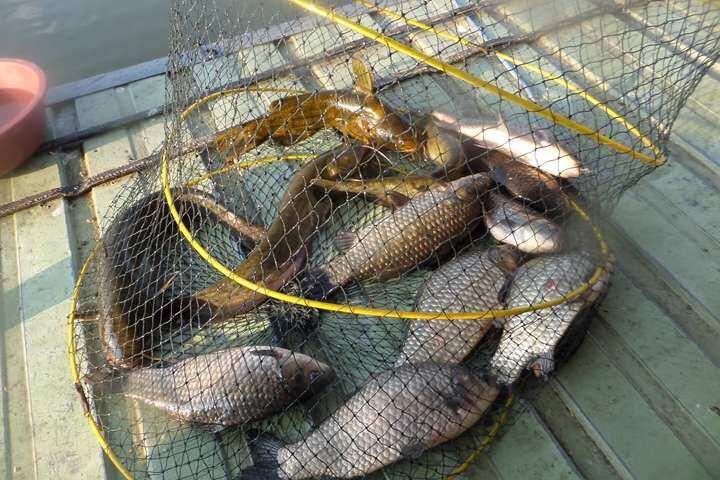 fish_pay_11260372.jpg