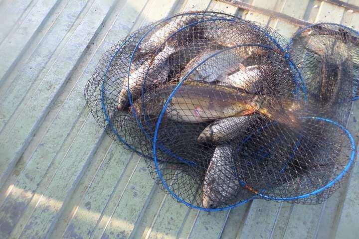 fish_pay_11260720.jpg