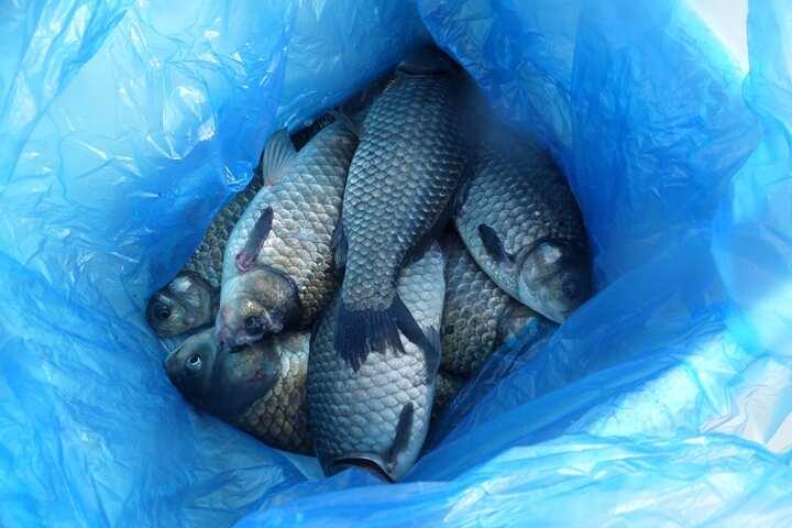 fish_pay_11262675.jpg