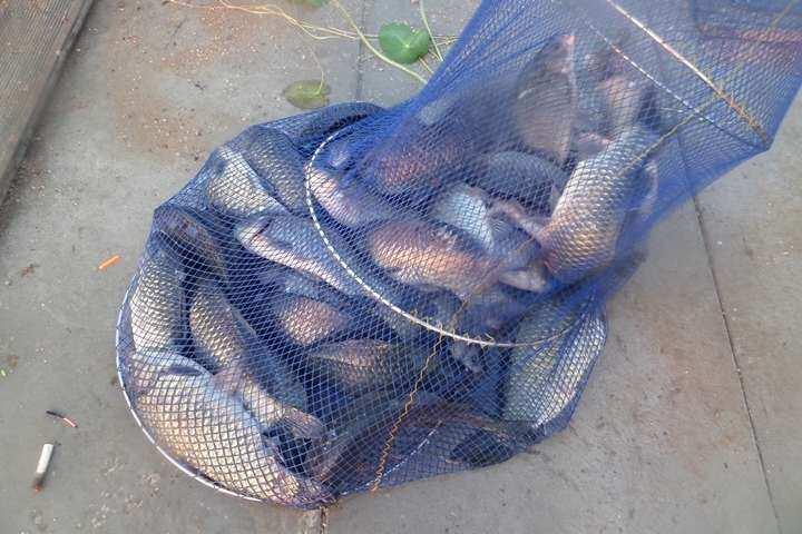 fish_pay_11263990.jpg