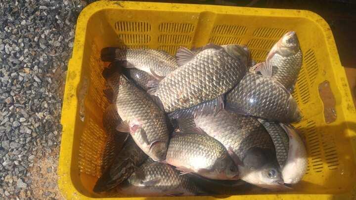 fish_pay_11282344.jpg