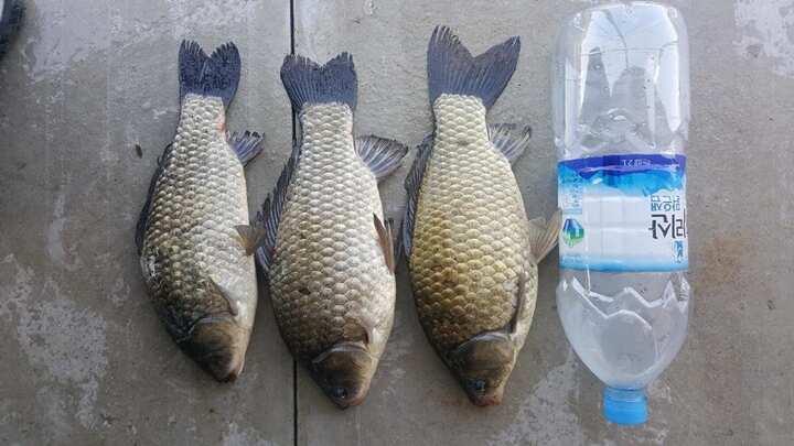 fish_pay_1128486.jpg