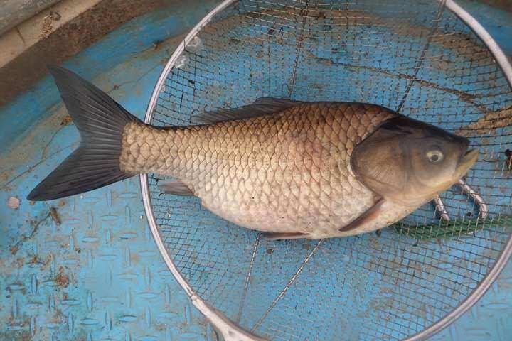 fish_pay_1133254.jpg