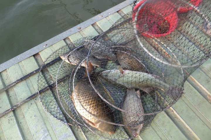 fish_pay_11333062.jpg