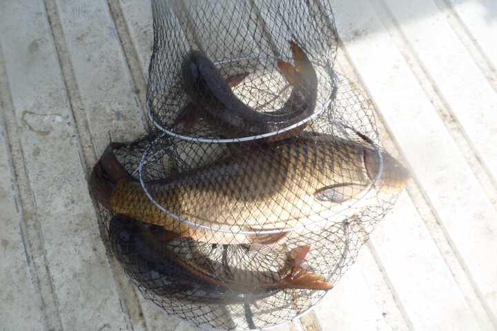 fish_pay_11351567.jpg