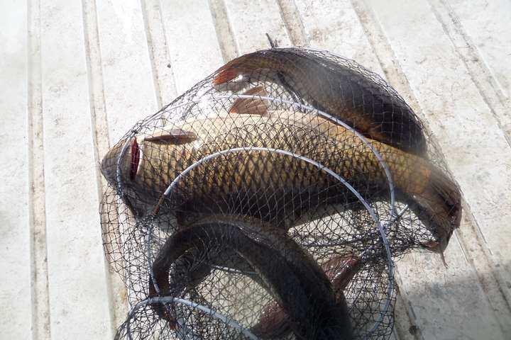 fish_pay_11351924.jpg