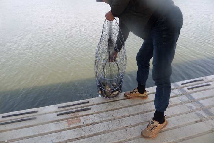 fish_pay_11464169.jpg