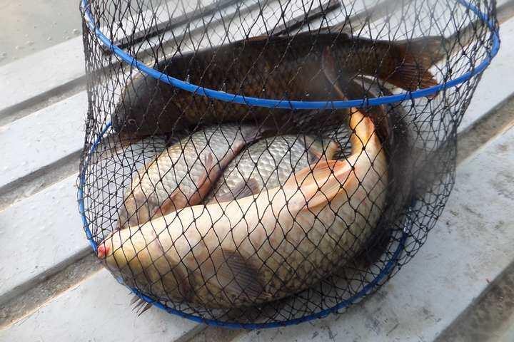 fish_pay_11470939.jpg