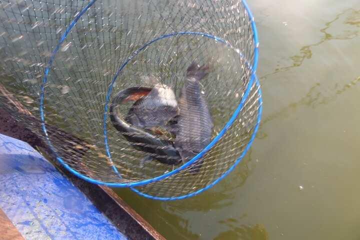 fish_pay_11472665.jpg