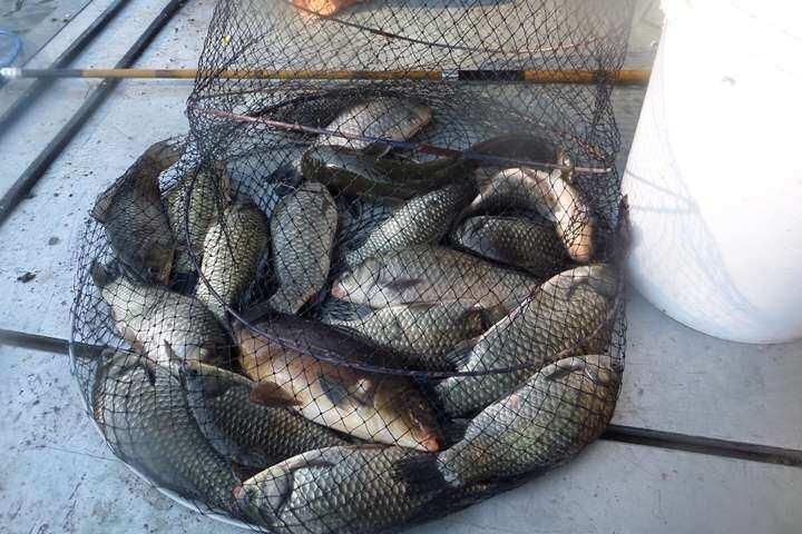 fish_pay_11473921.jpg