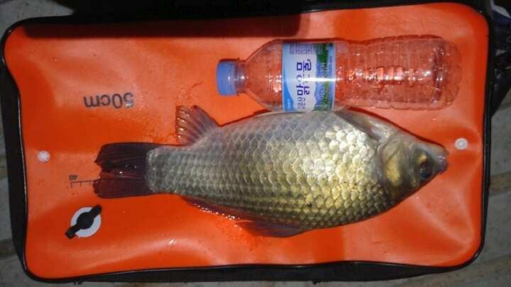 fish_pay_11494051.jpg