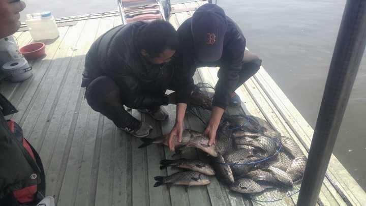 fish_pay_1150167.jpg