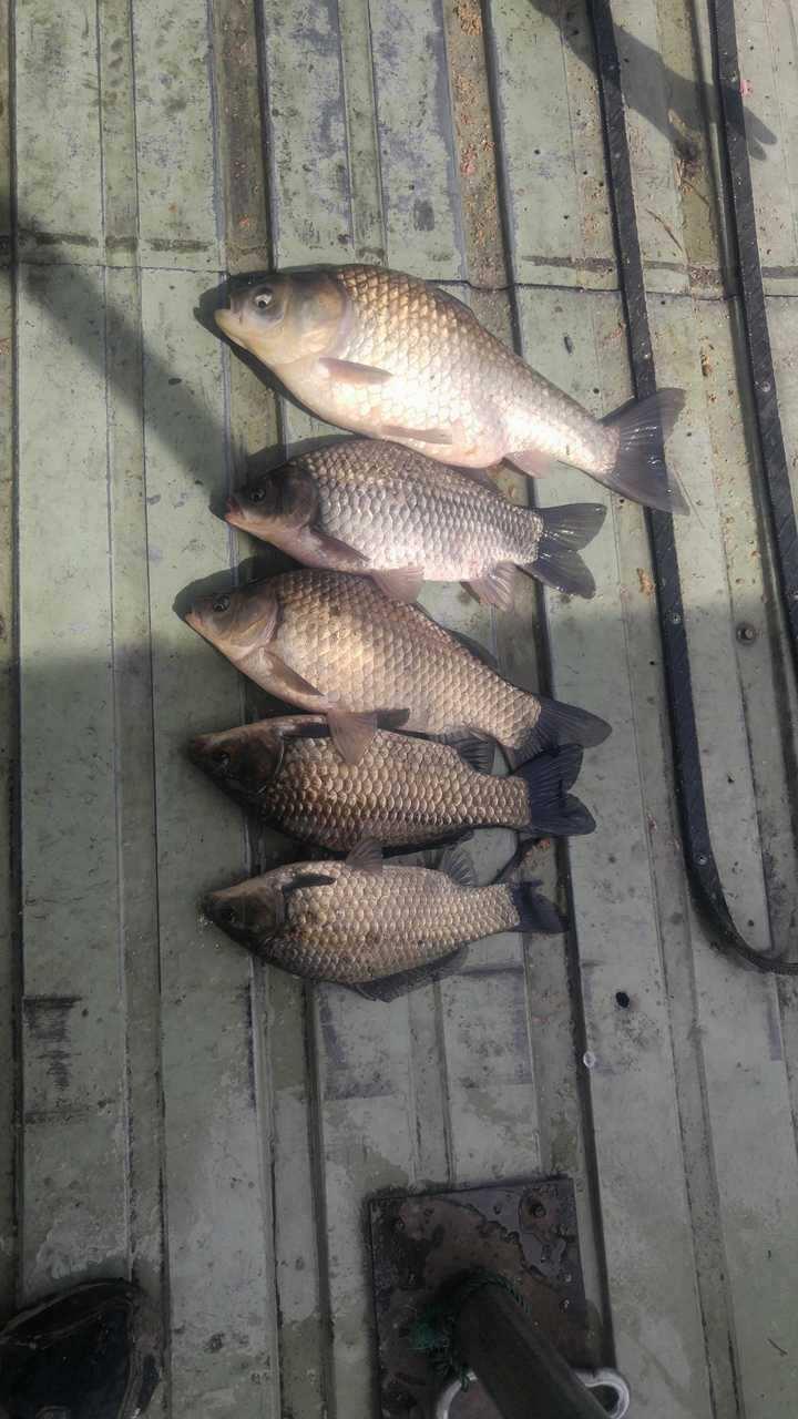 fish_pay_11503027.jpg