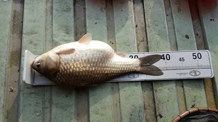 fish_pay_11510391.jpg