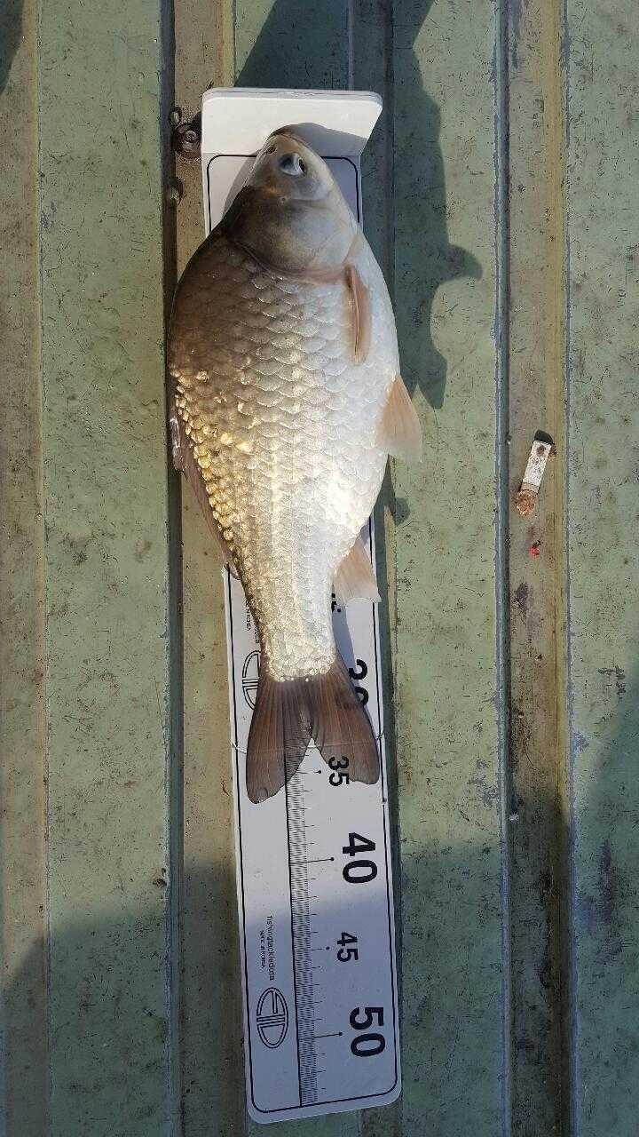fish_pay_1151088.jpg