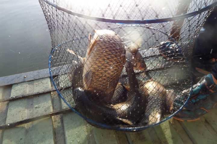 fish_pay_11513871.jpg