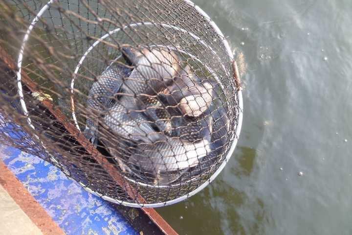 fish_pay_11532256.jpg