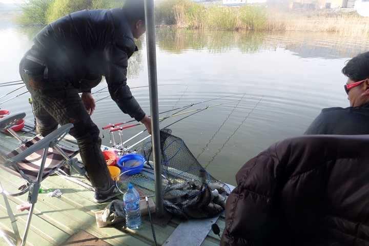 fish_pay_11540128.jpg