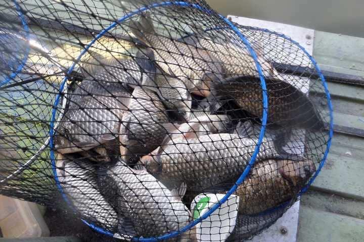 fish_pay_11541032.jpg
