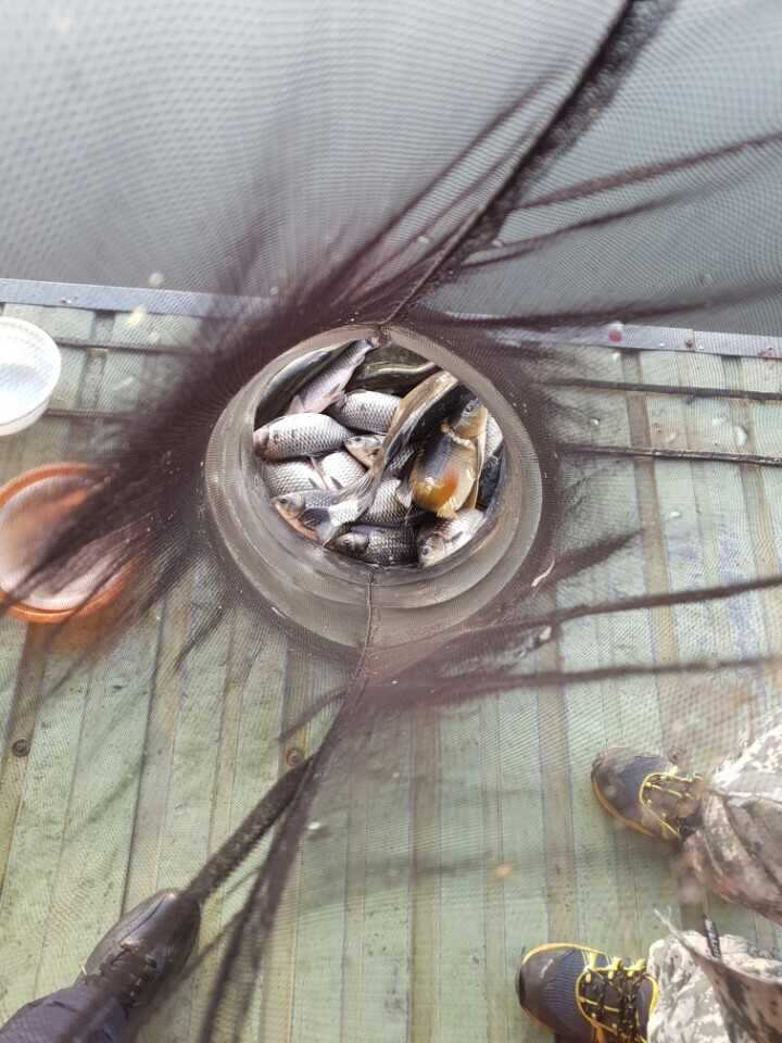fish_pay_11542615.jpg