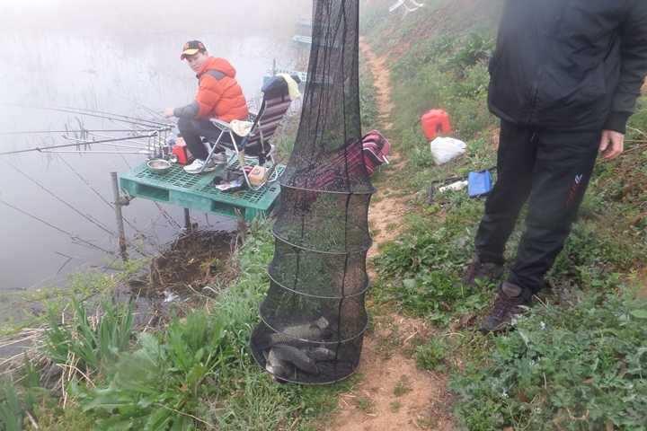 fish_pay_1155158.jpg