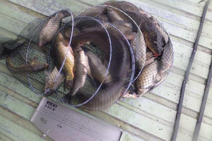 fish_pay_11554169.jpg