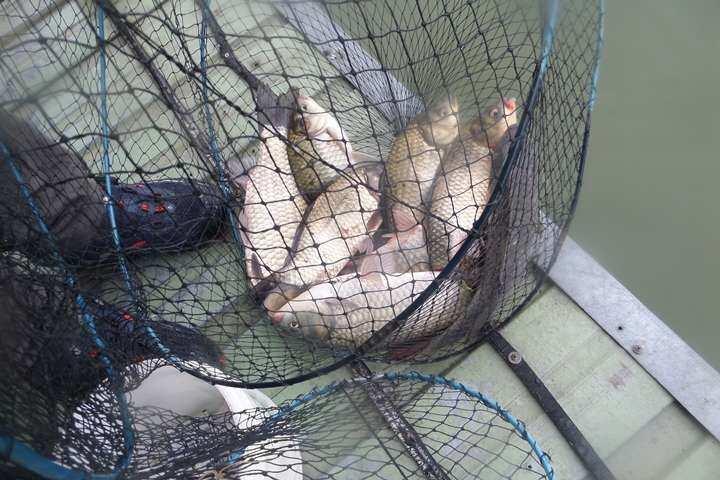 fish_pay_11564149.jpg