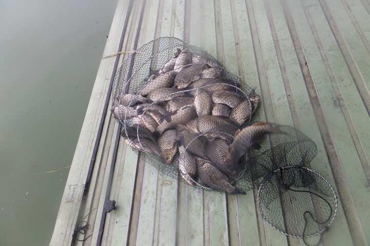 fish_pay_12003766.jpg
